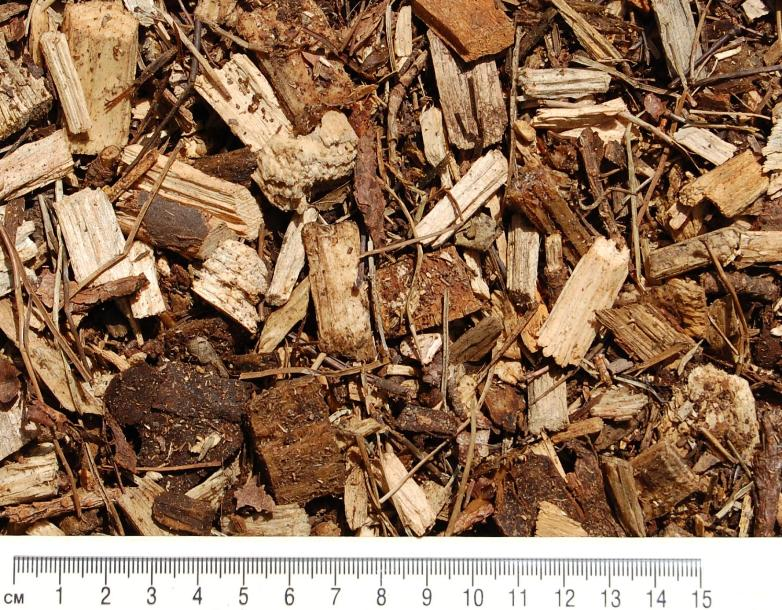 forest-biomulch